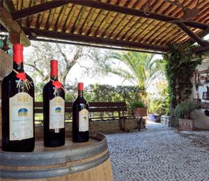 Vins & Dégustation